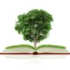 Fallübungen zum Umwelt- und Regulierungsrecht